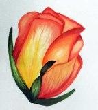 Orange Rose (watercolour), Una Verdandi, 2018